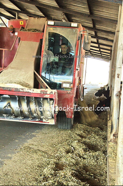 Israel, Jordan Valley, Kibbutz Asdot Yaacov, The dairy cowshed, Self-driving mixing truck. The truck automatically mixes silage, hay and other ingredients and distributes the mixture to the troughs