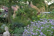 Aster x frikartii 'Monnch' AGM, Allium cristophii seed heads and Stipa gigantea, September