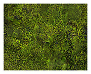 Nature intimate of green moss
