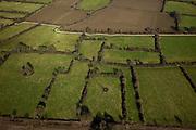 Nederland, Limburg, Gemeente Vierlingsbeek, 07-03-2010; Maasheggen tussen Vierlingsbeek en Boxmeer. Percelen gescheiden door gevlochten heggen van meidoorn en sleedoorn gelegen in de uiterwaarden van de Maas en in gebruik voor het weiden van vee. Historisch landschap met bijzondere ecologische waarde. e.Maasheggen between Vierlingsbeek and Boxmeer. Plots (for cattle) are seprated by means of twinned or woven  hedges of hawthorn and blackthorn. The hedges are located in the floodplain of the Meuse and used for grazing cattle. Historic landscapes with special ecological value.luchtfoto (toeslag), aerial photo (additional fee required);.foto/photo Siebe Swart