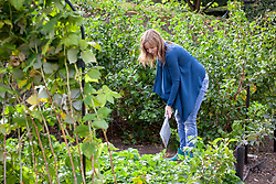 Digging heavy soil in a border in autumn