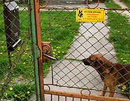Pies najlepszym obrońcą skrzynki pocztowej