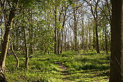 Remaining woodland at Poors Piece is pictured on 26th April 2021 in Steeple Claydon, United Kingdom. A strip of the woodland was removed by HS2 Ltd in February 2021. Poors Piece Protection Camp, set up in spring 2020 at the invitation of the land's owner Clive Higgins, is one of several protest camps set up by environmental activists in opposition to the HS2 infrastructure project along its Phase 1 route between London and Birmingham.