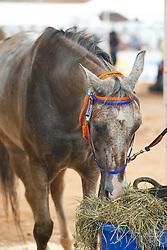Dachs Punti Jaume, ESP, Echo Falls<br /> World Equestrian Games - Tryon 2018<br /> © Hippo Foto - Sharon Vandeput<br /> {date