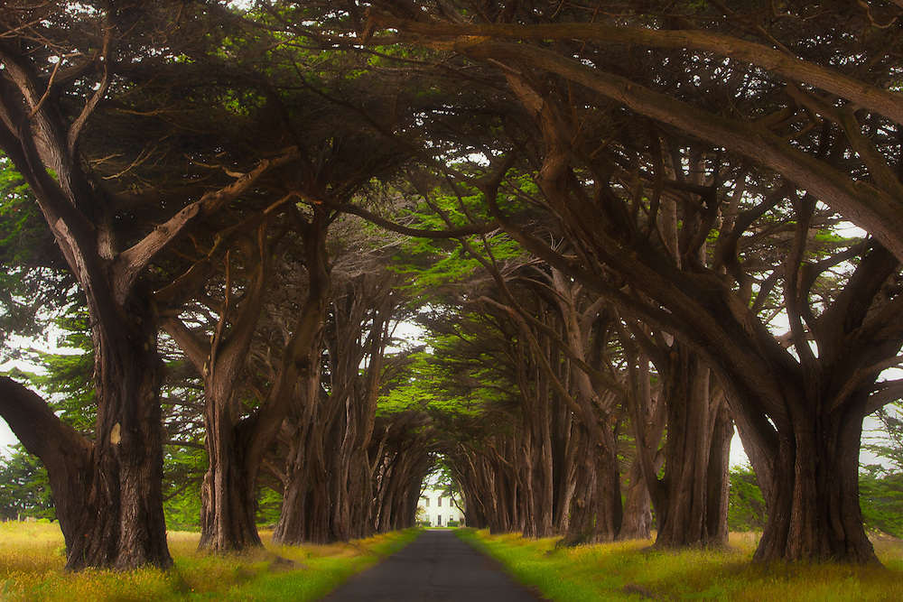 """The Monterey cypress """"tree tunnel"""" in Point Reyes National Seashore, in northern California. At the end of the tunnel is Historic RCA Coast Station KPH, now a historical landmark."""