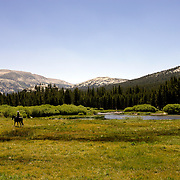 A National Park Service Ranger crosses Tuolumne Meadows near Tuolumne River in Yosemite National Park