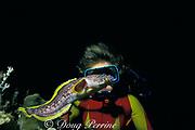 diver and coral toadfish or splendid toadfish, Sanopus splendidus , ( endemic ) Cozumel, Quintana Roo, Mexico ( Caribbean Sea ) MR 110