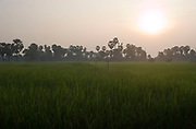 Rice paddy fields at sunrise on the road to Banteay Srei, north of Siem Reap and the main temple complex of Angkor.