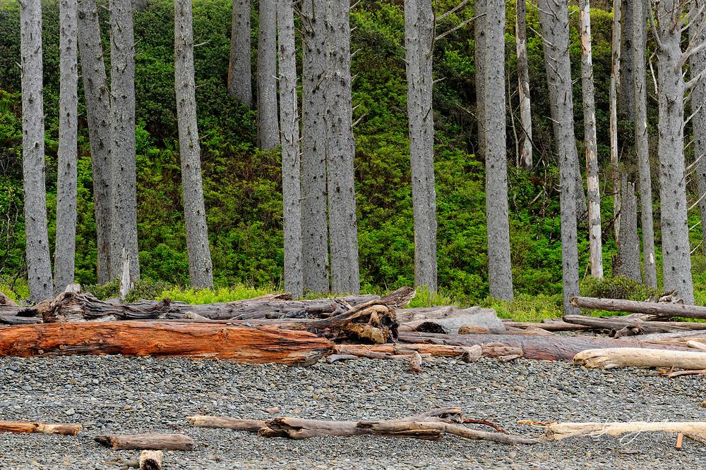 Coastal forest near Ruby Beach, Olympic National Park, Washington, USA