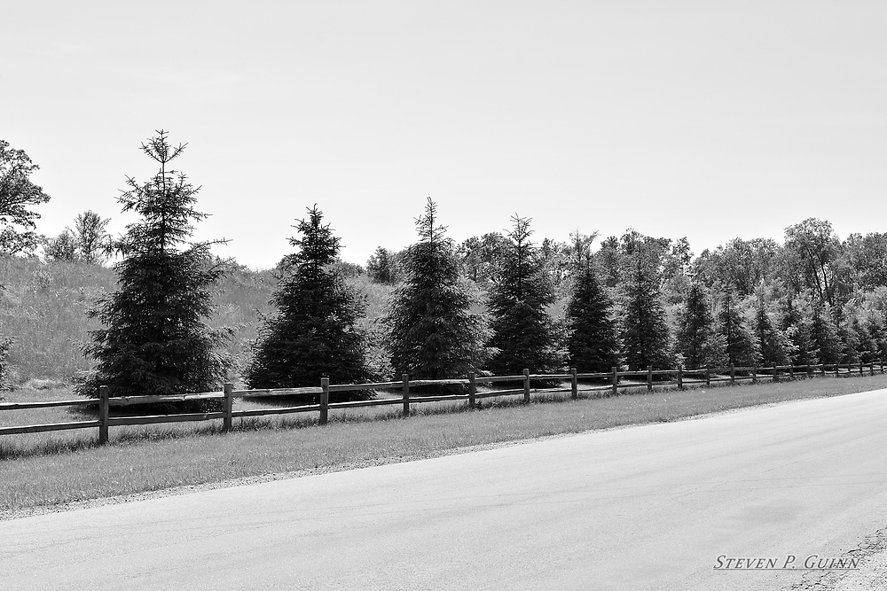 """I captured this landscape image in Demotte, Indiana on June 2nd, 2017. While driving down this road in Demotte, Indiana, I came across a row of pine trees behind a wooden fence and decided to turn around to view the scene from a different angle. I captured this in black and white because all of the foliage was green and the pine trees blended in too well. In black and white, I wanted to capture the shadows in the pine trees since they contrast much better with the overall light tone of the entire image than color would have, and the fine details of the pine trees all the way down the row are visible as a result. I like the wooden fence because it gives this scene a good country-like theme.<br /> <br /> Printed on Hahnemühle German Etching paper. Limited to 100 productions per size.<br /> <br /> Framed prints are available in 18"""" x 12"""", 24"""" x 16"""", 30"""" x 20"""", 36"""" x 24"""", 45"""" x 30"""", and 60"""" x 40"""" sizes."""