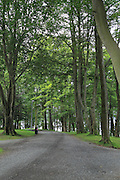Tree lined path in park, Nordnesparken, Nordnes area of city of Bergen, Norway