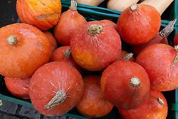Hokkaido Pumpkins for sale at organic farmers market in Berlin, Germany