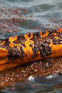 BP oil on the surface of Barataria Bay on the 45th day of the spill on both sides of boom that was set up to protect a barrier island in Barataria Bay.