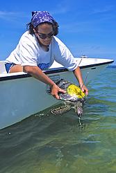 Erin Mcmichael Releasing Green Turtle