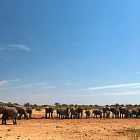 Africa, Namibia, Etosha. Landscape of elephants in Etosha National Park.