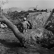 A Canadian soldier stands watch beside a Taliban ambush point where farmers trees were blasted after insurgents continually used the tree line to attack a Canadian combat outpost in the village of Nakhonay in Panjwaii District, Kandahar, Afghanistan. Nakhonay has long been the location of the Taliban's shadow government for the province of Kandahar. (Credit Image: © Louie Palu/ZUMA Press/The Alexia Foundation).July 15, 2010.Photograph taken on film exact date estimated and not known.....