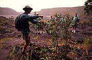 Huking, Kilauea Iki, Kilauea Volcano, Hawaii Volcanoes National Park, Island of Hawaii, (editorial use only, no model release)<br />