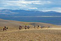 Islande, chevaux islandais // Iceland, Icelandic horses