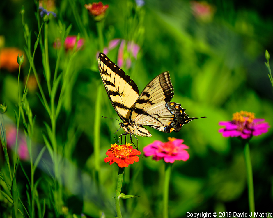 Backyard Summertime Nature in New Jersey. Image taken with a Fuji X-T2 camera and 100-400 mm OIS lens