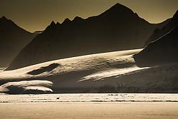 Polar bear (ursus maritimus) in Hornsund , Spitsbergen, Svalbard, Norway