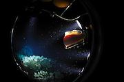 Cold water reef 220m Trondheimfjord, North Atlantic Ocean, Norway | Nach dem Abtauchen mit dem Forschungstauchboot JAGO kommt in etwa 200 Meter Wassertiefe ein Kaltwasser-Korallenriff ins Blickfeld. Trondheimfjord Norwegen