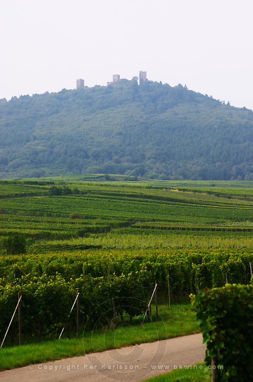vineyard haut eguisheim les 3 chateaux eguisheim alsace france