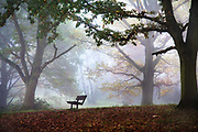Winter mist in Kenwood at Hampstead Heath with a lone empty bench in London, United Kingdom.