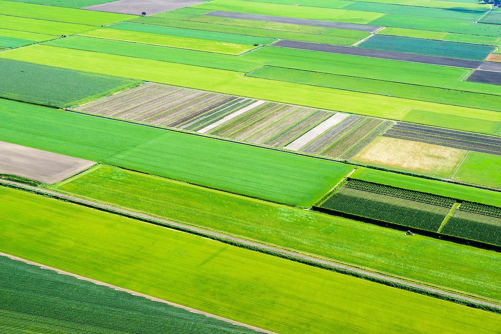 Nederland, Noord-Holland,  Gemeente Medemblik, 05-08-2014; Polder De Hooge Weere, tussen Sijbekarspel en Benningbroek. West-Friesland, bekend gebied voor de teelt van groente.<br /> West-Friesland, well known area for growing vegetables.<br /> luchtfoto (toeslag op standard tarieven);<br /> aerial photo (additional fee required);<br /> copyright foto/photo Siebe Swart