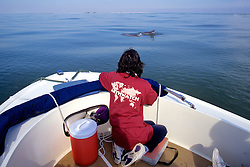 Jan Rymer Observing Dolphins