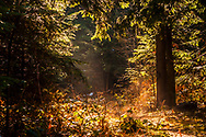 Cosy place in a sunny spot at the forest
