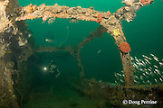 divers explore the wreck known as the Japanese Patrol Boat, a 32 m long trawler-style WW II Japanese vessel, possibly a tugboat or submarine chaser, sunk upright in 18-25m of water in Triboa Bay, within Subic Bay, Philippines, presumed to have been sunk by an Allied air attack in 1944-1945; MR 378, 379
