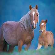 palomino mare with new born foal standing in lush green meadow