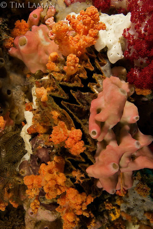 Reef detail with soft corals, sponges, and a zigzag oyster.