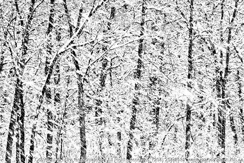 Snow storm in Seine River forest<br /> Winnipeg<br /> Manitoba<br /> Canada<br />Winnipeg<br />Manitoba<br />Canada