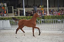 063 - Jessyalve<br /> Merrieveulens springen<br /> KWPN Paardendagen - Ermelo 2014<br /> © Hippo Foto - Leanjo de Koster