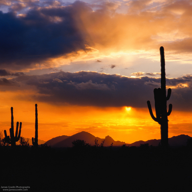 Sunset silhouettes Camelback Mountain and saguaro cactus in the Salt River Valley in the Sonoran Desert of Arizona
