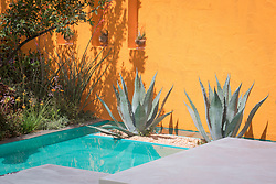 Beneath a Mexican Sky Garden, Agave americana in bed surrounded by turquoise pool in front of brightly painted walls.  Design: Manoj Malde, Built by: Living Landscapes, Sponsored by: Inland Homes PLC