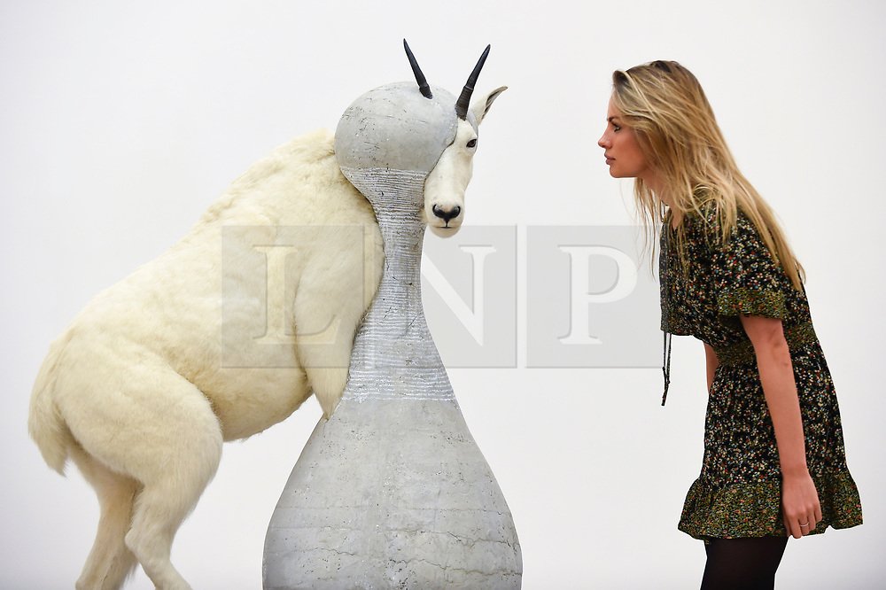 """© Licensed to London News Pictures. 27/09/2018. LONDON, UK. A staff member views """"Christian Dior - J'adore (Mountain Goat)"""", 2008, by Steve Bishop. Preview of """"Black Mirror"""", a major new exhibition featuring the work of 26 contemporary artists, at the Saatchi Gallery.  The show explores art's role in social satire and how political uncertainty has influenced art of recent years and runs 28 September to 13 January 2019.   Photo credit: Stephen Chung/LNP"""