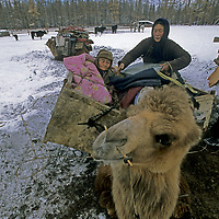 MONGOLIA, Darhad Valley. Otgonji helps to load her 88-year old grandmother, Dashingaa, onto a camel for100+km migration across Horidol Saridag Mts.