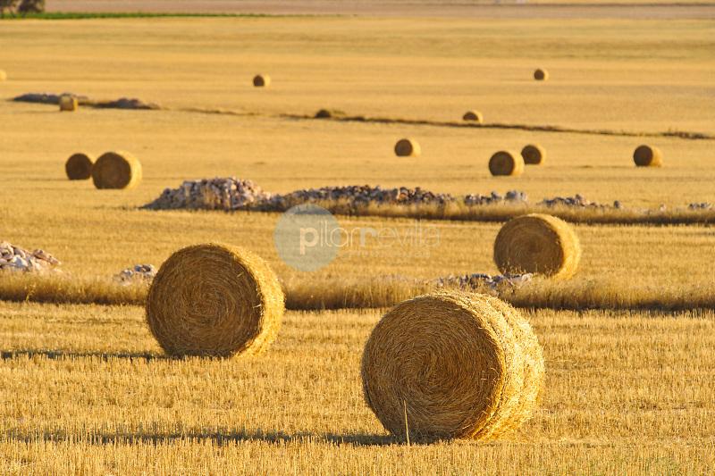 Balas de paja y campo de cereal. Almansa. Albacete ©Antonio Real Hurtado / PILAR REVILLA