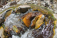 Details of The Nevada Hot Springs in The Black Canyon, Nevada.