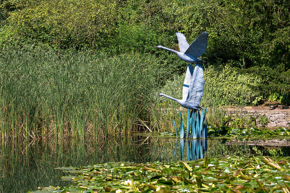Sculptures of flying swans in bronze by Lloyd Le Blanc above the lake at Le Manoir Aux Quat' Saisons in Oxfordshire, UK