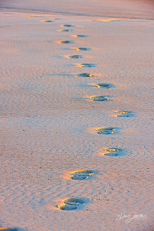 footprints in sand beach at dawn, Anastasia State Park, St. Augustine, Florida, USA