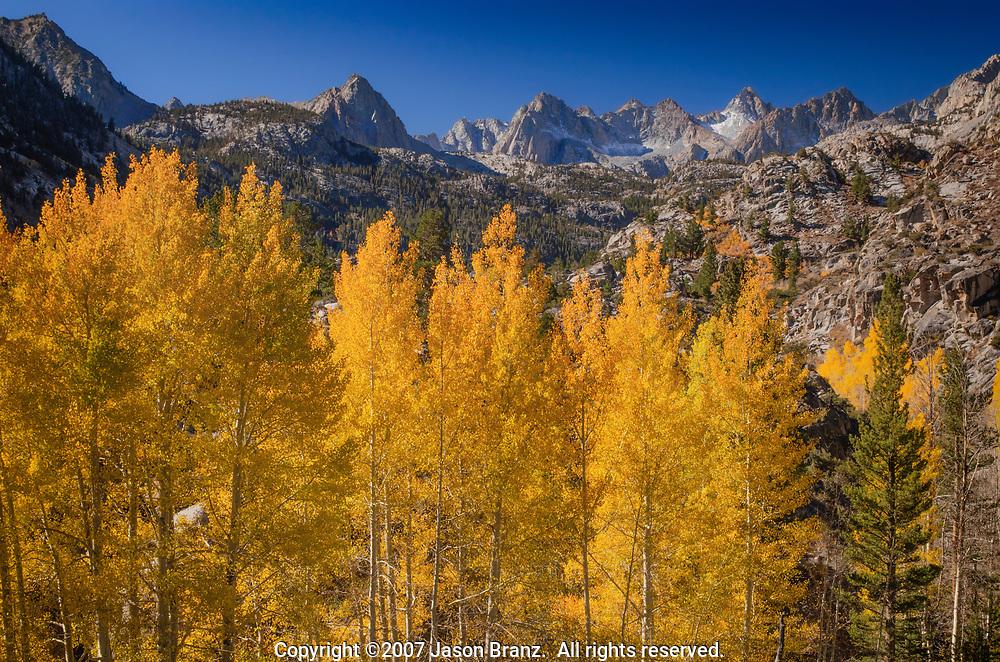 Golden aspen trees below the peaks of the Sierra Nevada near Lake Sabrina, Inyo County, California.
