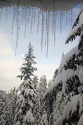 North America, United States, Washington, icicles and snow covered trees at Crystal Mountain, viewed through window