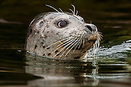 USA-Alaska-Southeast-Wildlife