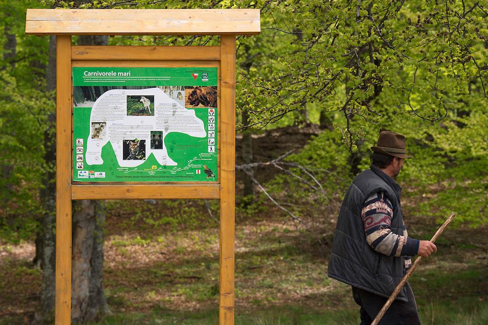 Tarcu mountains nature reserve, Natura 2000 area, Southern Carpathians, Romania. T
