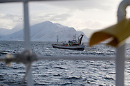 Fishing for spring spawning herring, Moere coastline, Norway<br /> Model release by photographer