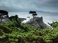 Lone Cypress Tree at 17 Mile Drive, Pacific Grove, California