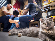 "25 MAY 2015 - BANGKOK, THAILAND:  A housecat sits on the floor while Ajarn Neng Onnut tattoos people in his Sak Yant tattoo parlor. Sak Yant (Thai for ""tattoos of mystical drawings"" sak=tattoo, yantra=mystical drawing) tattoos are popular throughout Thailand, Cambodia, Laos and Myanmar. The tattoos are believed to impart magical powers to the people who have them. People get the tattoos to address specific needs. For example, a business person would get a tattoo to make his business successful, and a soldier would get a tattoo to help him in battle. The tattoos are blessed by monks or people who have magical powers. Ajarn Neng, a revered tattoo master in Bangkok, uses stainless steel needles to tattoo, other tattoo masters use bamboo needles. The tattoos are growing in popularity with tourists, but Thai religious leaders try to discourage tattoo masters from giving tourists tattoos for ornamental reasons.       PHOTO BY JACK KURTZ"